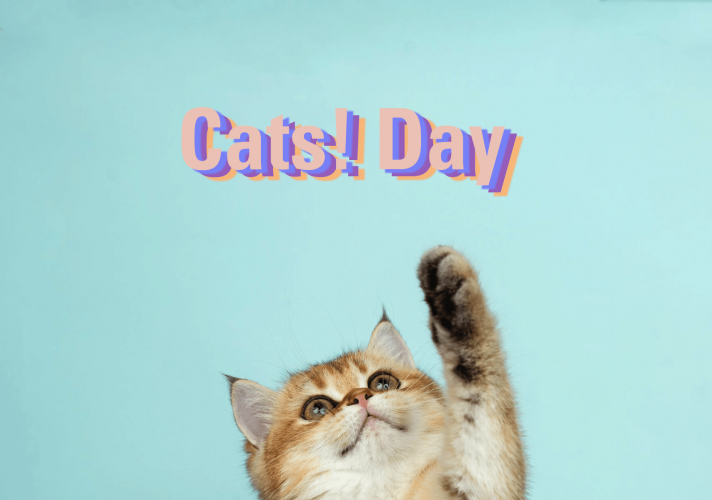 Cats Day at roberson museum e1622734253491 - Cats! Day