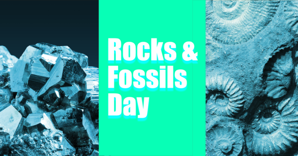 Rocks and Fossils Day Roberson